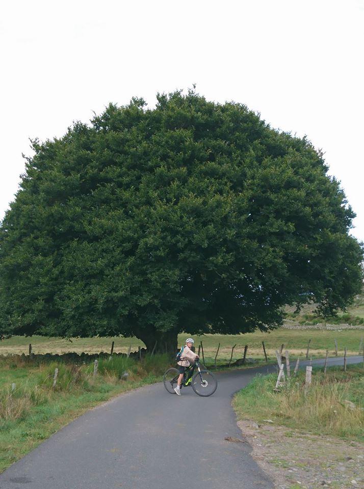 arbre_centenaire_pont_de_repon
